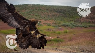 Download Soar With a Golden Eagle | The Daily 360 | The New York Times Video