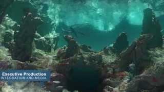 Download Manta® at SeaWorld® San Diego Falcon's Digital Media HD Video