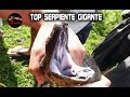 Download SERPIENTES GIGANTES: Las Serpientes mas Grandes del mundo Video
