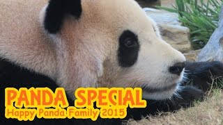 Download PANDA SPECIAL ~Happy Panda Family 2015~ 桜浜桃浜良浜海浜陽浜優浜 Video