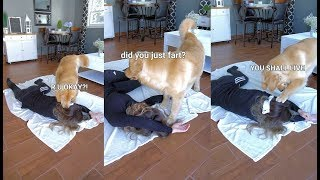 Download Faking My Death in Front of My Dog - Funny Dog Reacts Video