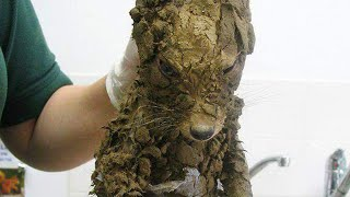 Download Workers Thought They'd Found A Muddy Puppy But They Cleaned It Off And Got The Cutest Surprise Video