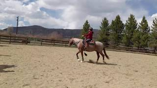 Download Calm Your Horse During a Ride Video