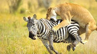 Download 10 Amazing Animal Predators Video