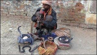Download Nepal Ka Madari India Ka Sanp ll Street Performer & Cobra Snake Show. Video