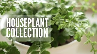 Download My Plant Collection | Easy & Low Maintenance Houseplants Video