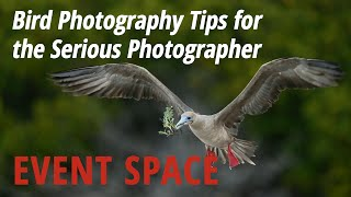 Download Bird Photography Tips for the Serious Photographer Video