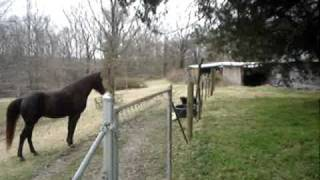 Download Horse and dog play together. Video
