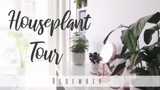 Download Houseplant Tour! | December 2018 Video