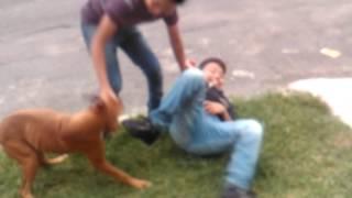 Download Niño vs perro Video
