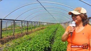 Download Người Việt và nghề trồng rau trên đất Mỹ Video