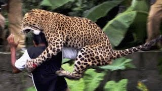 Download 16 Worst Animal Attacks Video