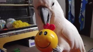 Download Max And His Smilely Ball Video