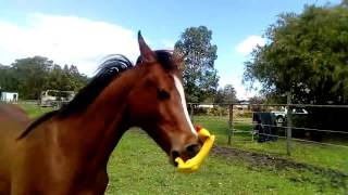 Download Horse vs Duck Video