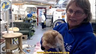 Download Adoption of Fern 01-16-2020 Friends of Felines Rescue Center (FFRC) Video
