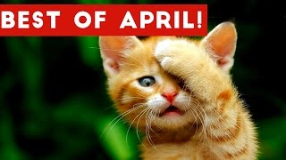 Download Funniest Pet Reactions & Bloopers of April 2017 | Funny Pet Videos Video