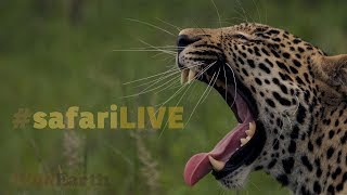 Download safariLIVE - Sunrise Safari - Oct. 20, 2017 Video