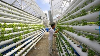 Download The Future of Vertical Farming: Sustainable Gardens, Sustainable Agriculture Video