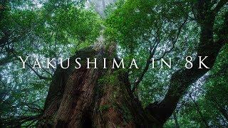 Download Yakushima in 8K Video
