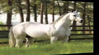 Download Melhores Cavalos De Vaquejada Atualmente !! Video