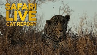 Download The Cat Report: 8 - 14 July Video