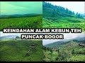 Download KEINDAHAN ALAM KEBUN TEH PUNCAK BOGOR Video
