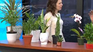 Download Caring For Indoor Plants In The Winter Months Video