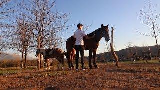 Download No sabía todo lo que pueden enseñarnos los caballos | Nono, Córdoba Video