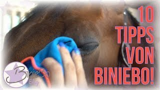 Download 10 TIPPS aus meinem STALLALLTAG! | TEIL 1 | BinieBo Video