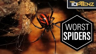 Download Top 10 Most VENOMOUS SPIDERS in the WORLD Video