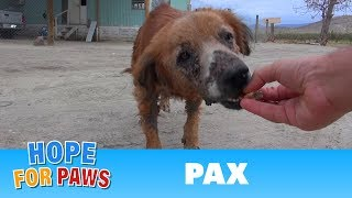 Download Rescue of a sick dog close to the U.S / Mexico border. Video