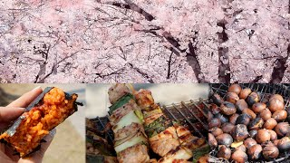 Download Cherry Blossom Festival & Street Food Video