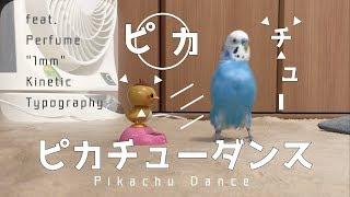 Download ごきげんなインコ!ピピの「ピカピカ☆ピカチュウダンス」feat. Perfume ″1mm″ Kinetic Typography [#056] Video