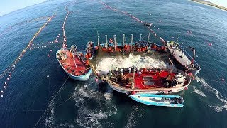 Download Amazing Big Fish Catching Vessel On The Sea, Big Catch Fishing Process Video