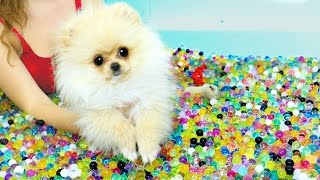 Download Puppies VS Orbeez Challenge! Video