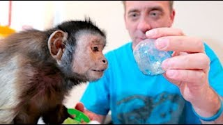 Download Capuchin MonkeyBoo ″Adopt-A-Class″ Mail! Video