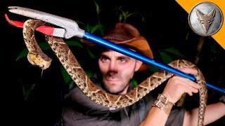 Download KILLER Snake of Central America! Video