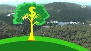 Download معلومات″قيمة الغابات″ | أفكار عالمية Video