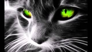 Download Cats Protect You and Your Home from Ghosts and Negative Spirits Video