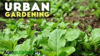 Download Urban Gardening : Best Practices in Urban Gardening | Agribusiness Philippines Video