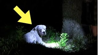 Download Officers Found This Dog Cowering Alone In The Everglades When The Flash light Lit His Face Shocking Video