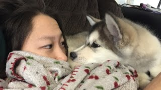 Download Dogs Waking Up Owners (HD) [Funny Pets] Video
