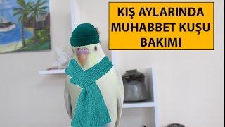 Download Kış Aylarında Muhabbet Kuşu Bakımı Video