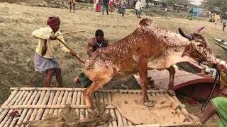 Download Bolod Accident At Paragram Haat 13/01/2018 Video
