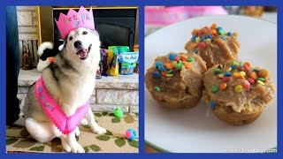 Download HAPPY BIRTHDAY MEMPHIS THE HUSKY Video
