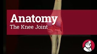 Download Anatomy: The Knee Joint Video