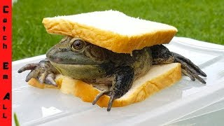 Download 2 FROGS 1 SANDWICH! (Everybody Eats) Video