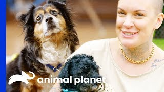 Download Mr. Rags & Mcgee Find Their Forever Homes   Amanda To The Rescue Video