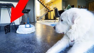 Download KITTEN MEETS DOG FOR THE FIRST TIME Video