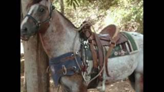 Download El Guasón...El caballo record en el 2010. Video